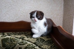 (lolita.khlynina) Tags: house home animal pets pet woman people hand kitten cat
