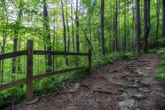 Lush Greenery, 2019.04.27 (Aaron Glenn Campbell) Tags: outdoors nature optoutside spring hiking foliage leaves trail frozenhead statepark morgancounty wartburg tennessee tn nikcollection viveza colorefexpro softfocus glamourglow sony a6000 ilce6000 mirrorless rokinon 12mmf2ncscs wideangle primelens manualfocus emount
