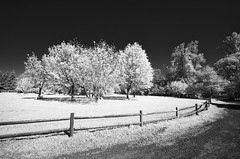 On the other side - HFF - infrared (JSB PHOTOGRAPHS) Tags: 59045820000101 infraredconvertedcamera infrared fence fencefriday trees blackandwhite 590nm nikon d7000 hff tokina 1116mm f28 pro