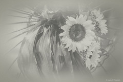 Flower Study in Monochrome, no. 19_52_2019 (a g a t a d p r a w d z i k) Tags: photography flowers monochrome toned fineart ppc princetonphotographyclub textures