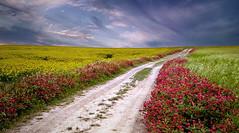 Primavera (Zz manipulation) Tags: art ambrosioni zzmanipulation primavera colori rosso strada campagna natura erba fiori cielo nuvole landscape