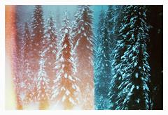 0081-7648-00 (jimbonzo079) Tags: screenshot screen canon a1slr fd 35105mm f35 nfd fdn lens konica minolta dimage scan dual iv kodak ultramax 400 1600 pushed 2 stops pushed2stops asa1600 negative film analog 35mm 135 color old vintage retro life light mood atmosphere snow weather winter forrest mountain tree pine fir spruce burn leak 2018 canona1 fd35105mmf35 nfd35105mmf35 fdn35105mmf35 konicaminoltadimagescandualiv kodakultramax4001600pushed2stops kodakultramax400 lightleak