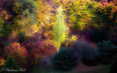 Birch (kud4ipad) Tags: 2018 poland tree plants nature landscape