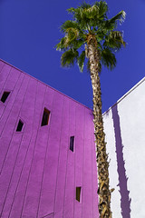 Palm at the Saguaro in Palm Springs, California (crabsandbeer (Kevin Moore)) Tags: 2018 california landscape november october trip palm palmtree shadow thesaguaro saguaro palmsprings desert color purple geometry trave motel hotel windows midcenturymodern 50s 60s kitsch architecture