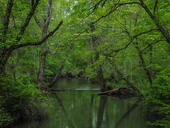 Abrams Creek, Great Smoky Mountains National Park, Tennessee (netbros) Tags: greatsmokymountainsnationalpark tennessee cadescove cadescovelooproad abramscreek netbros internetbrothers