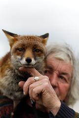 Man and Fox (mond.raymond1904) Tags: rescued fox man friendship