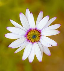 Beautiful flower .. (Julie Greg) Tags: flower nature nautre colours canon details soft park spring spring2019