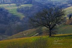 12012014-DSC_2043-1 (stefano.paglialunga1) Tags: natura nikond7000 nikon reflex green verde colline campagna outdoors beautiful paesaggio landscape provinciamacerata
