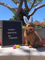 Parker  not the Easter Buny