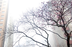 misty, sometimes... (@petra) Tags: morning urban mist fog trees flowers buildings skyscrapers moody atmospheric nikon revisited