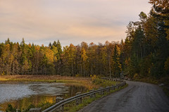 Swedish autumn day. (Bessula) Tags: bessula nature autumn fall lake road forest sky rushes sweden landscape country light scenery