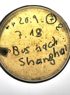 Cultural morphing contamination: bus_shanghai_S25hellerHochformat