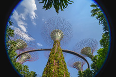 Singapore - 125 (coopertje) Tags: singapore asia azie gardensbythebay marina bay sands hotel casino mall park garden tree giant enormous artificial architecture lights supertreegrove lightshow laser
