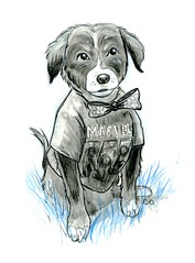 Marvel Superfan Beckham (Calzephyr) Tags: dog dogs sketch sketches drawings drawing nobody
