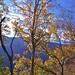 20190506-DAO_0206 秋天楓樹葉子的色彩