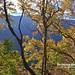 20190506-DAO_0203 秋天楓樹葉子的色彩