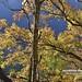 20190506-DAO_0202 秋天楓樹葉子的色彩