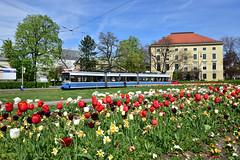 MVG München l R2.2 2105 l Karolinenplatz l 22.04.2019 (Kevin.Sommer) Tags: tram strasenbahn münchen karolinenplatz sendlinger tor petuelring blumen