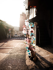 (Yakinik) Tags: 富士フイルム fujifilm gfx 50s japan 日本 tokyo 東京 yakinik gf 45mm f28 r wr