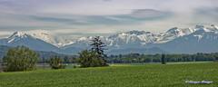 Vue sur les Alpes (joménager) Tags: nikonpassion nikonp330 montages suisse lesalpes paysage