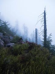 _1050039.jpg (tuehna) Tags: mummelsee hornisgrinde schwarzwald blackforest