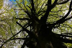 Maulazzo (Cristian Corso) Tags: nebrodi lake landscape tree wild green canon