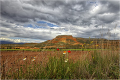 Sierra de Armantes (Fernando Forniés Gracia) Tags: españa aragón zaragoza calatayud ateca sierradearmantes paisaje landscape naturaleza nubes cielo flores ababoles amapolas margaritas