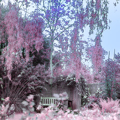 IR fantasy bower HSS (Wendy:) Tags: hss seat ts ir filter hitech prostopndir6 customwb bench clematis willow 720nm