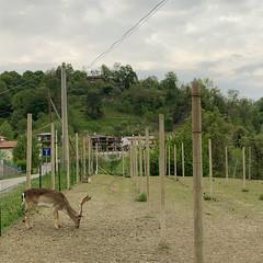 (Paolo Cozzarizza) Tags: italia friuliveneziagiulia pordenone castelnovodelfriuli scorcio animale alberi strada
