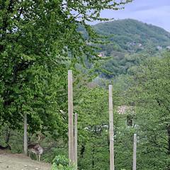 (Paolo Cozzarizza) Tags: italia friuliveneziagiulia pordenone castelnovodelfriuli scorcio animale alberi