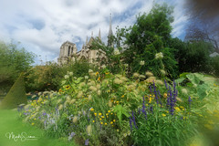 Springtime at Notre-Dame (marko.erman) Tags: paris france cathedral church monument architecture beautiful seine river sony popular pov gardens flower springtime wideangle