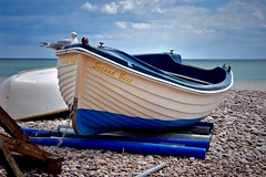 Second Best (Nige H (Thanks for 20m views)) Tags: nature landscape seascape beach boat bird animal seagull pebbles devon england budleighsalterton secondbest