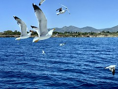 Remember to look up_IMG_E8800r1 (AchillWandering) Tags: sea seagulls island blue view wildlife birds outdoor travel nature water saronikos saronikosgulf