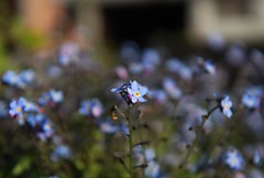 The one in focus (erlingraahede) Tags: urban vsco canon bokeh focus flowers holstebro