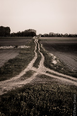 Crossroads (Peter Szasz) Tags: calm canon canon80d 50mm 50 outside outdoors out landscape land nature peaceful old magyarország hungary hajdúbihar hajdu berettyóújfalu flowers grass earth trees road path crossroad countryside tranquil tracks patch house farm building distance distant far away line lines parallel moody sky bright spring april brown black blackwhite monochrome field afternoon way tire walk colorless blackwhitephotos