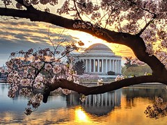 Jefferson sunrise (ekelly80) Tags: dc washingtondc april2019 spring cherryblossoms morning light sunrise flowers blossoms pink morninglight sun tidalbasin branches trees jeffersonmemorial view