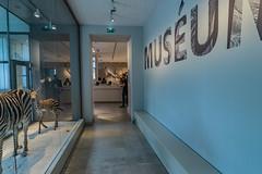 52-Entrée du Museum (Alain COSTE) Tags: bordeaux gironde france jardinpublic museum 2019 nikon
