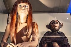 26-Hominidé et primate (Alain COSTE) Tags: bordeaux gironde france jardinpublic museum 2019 nikon