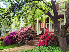 spring popping (ekelly80) Tags: dc washingtondc april2019 spring clevelandpark flowers azalea yard green grass flag americanflag