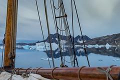 Early morning; down the Kangerdlugssuaq Fjord. (apcmitch) Tags: sailing sea icebergs mountains fjords dolphin greenland eastgreenland2014 early morning sonya7 seascape