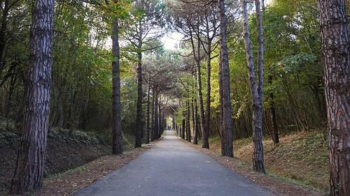 Autumn at the Arboretum of Ataturk. İstanbul, Turkey 🇹🇷