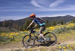 Couldn't Be A Better Day (Ed.Stockard) Tags: bike ride mtbike mountainbike 275 flowers wildflowers trail spring sprintime arrowleafbalsamroot wheels buckmt buckmountain wa washington methow methowvalley