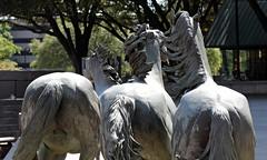 Rear detail (zeesstof) Tags: zeesstof businesstrip timeoff irving texas lascolinas themustangsoflascolinas bronzesculpture dallassuburbs