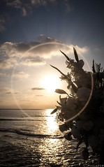 Digging in my old files (Sunset cliffs, San Diego, CA) (LTL78) Tags: fujifilm x100t sandiego california usa oca playa mar beach sea flower