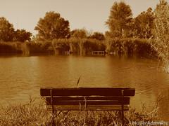 Horgásztó (MullerAdam_hu) Tags: stég nádas horgásztó horgászat kikapcsolódás pihenés természet tó ősz magyar magyarország harta canonpowershots2is 2007 pier reeds fishinglake fishing recreation rest nature lake autumn hungarian hungary