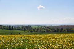 Le petit nuage (Croc'odile67) Tags: nikon d3300 sigma contemporary 18200dcoshsmc paysage landscape printemps prairie campagne pissenlit dandelion nuage ciel cloud sky flowers fleurs spring fruhling