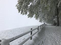 Reality (Sibeal's world) Tags: people fog foggy forest wood fence degersheim tegersche föhrewäldli snow spring winter