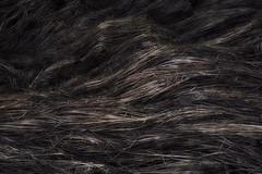 Сон прошлогодней травы (olegkulishov) Tags: абстракт пейзажарт весна природа трава сон метафизика мертвая натура минимализм