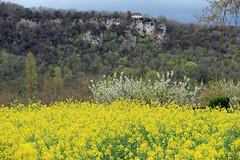 Vallée de la Dordogne (Yvan LEMEUR) Tags: dordogne valléedeladordogne colza champdecolza printemps falaises fleurs extérieur périgord falaise landscape paysage arbresenfleurs france cieldorage