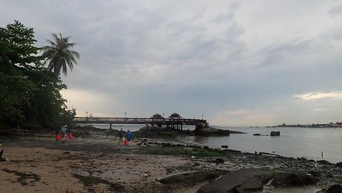 Bryozoan survey, Pulau Ubin